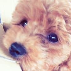 ♡KARIN♡のアイコン画像
