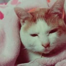 ♡猫♡clarinetのアイコン画像