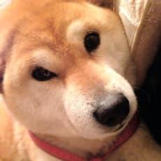 Cookieのアイコン画像