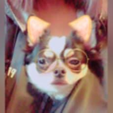 아지のアイコン画像