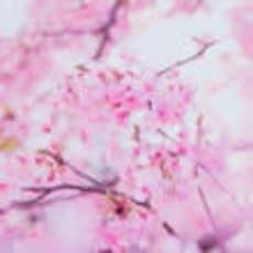凛、花。のアイコン画像