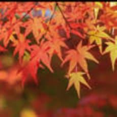 紅葉のアイコン画像