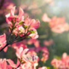 桜月春のアイコン画像