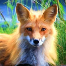 歌狐のアイコン画像