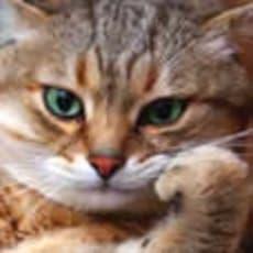koaのアイコン画像