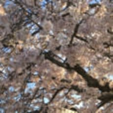 sachie(*☻-☻*)のアイコン画像