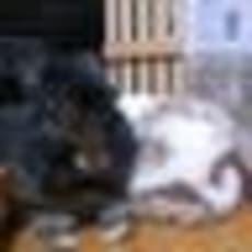 華兎のアイコン画像