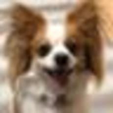 しょこ/annaのアイコン画像