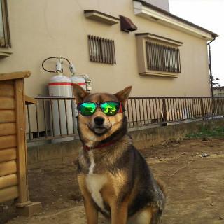 ミックス犬飼ってる人犬が好きな人お話しましょう