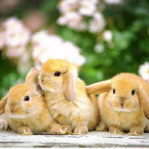 ウサギ好き