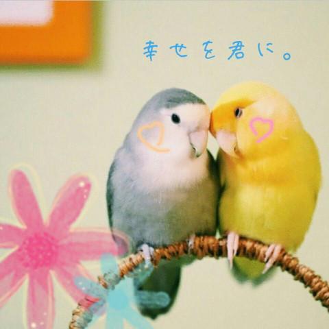 セキセイインコが好きな人集まれ〜!